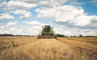Как заработать на фермерстве: план создания своего хозяйства