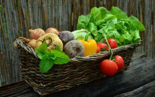 Готовимся к сезону: сколько можно заработать на огороде?