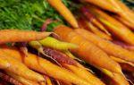 Власти Беларуси утвердили надбавки к ценам на закупку сельхозпродукции